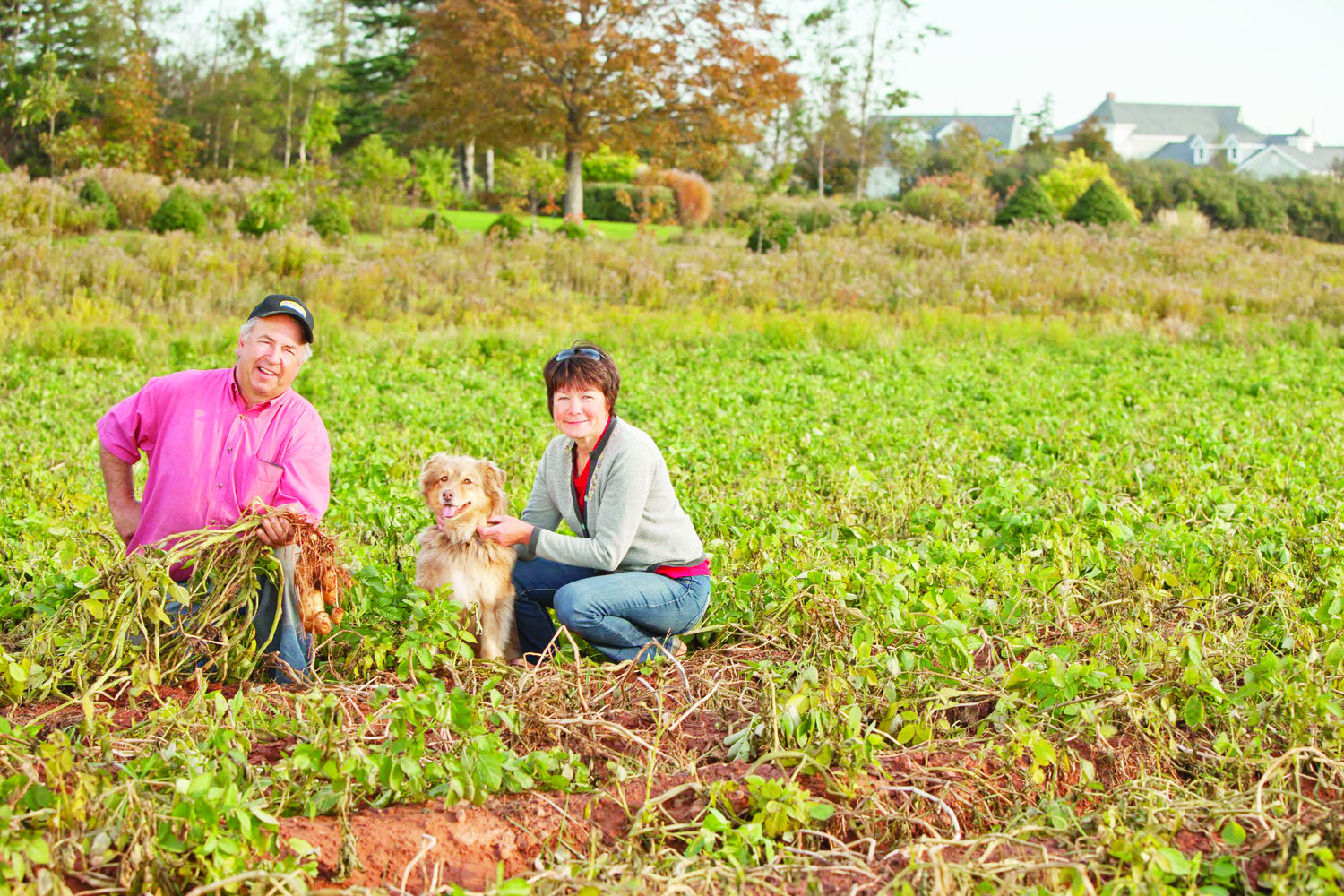 P E I  farmers trying to reverse worrying declines in soil