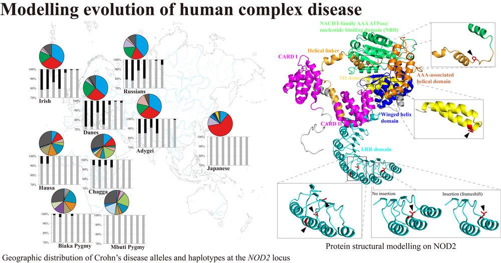 Nakagome  et al . (2012)  Mol Biol Evol