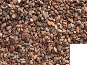 cocoa-header