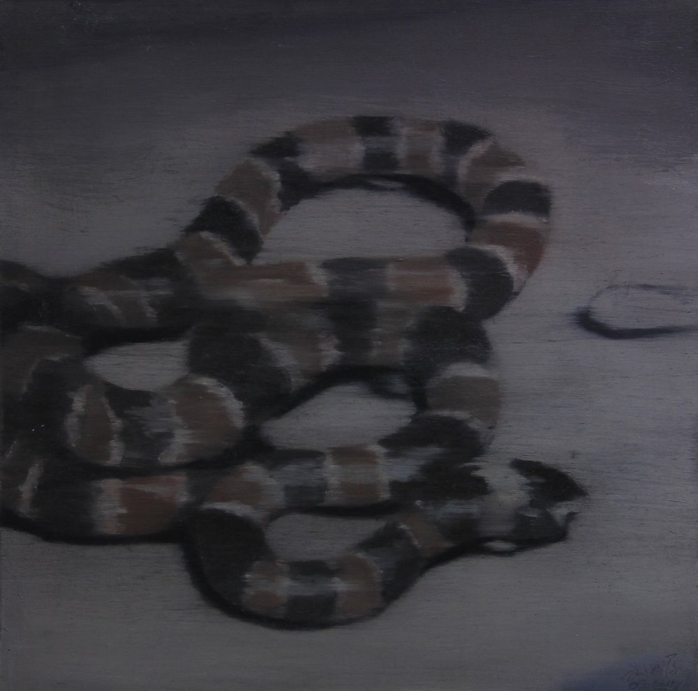 Coral snake,2010,  30cm x 30cm, Oil on canvas.jpg