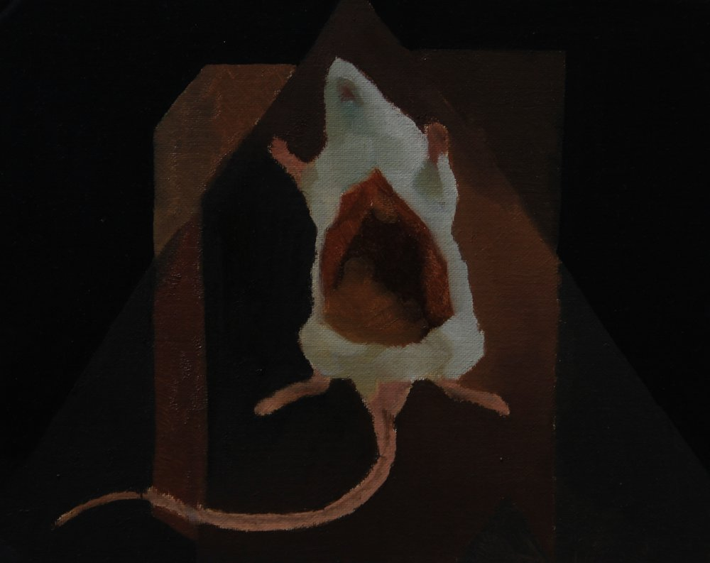 Specimens,2012,24cm x 30cm, Oil on canvas.jpg