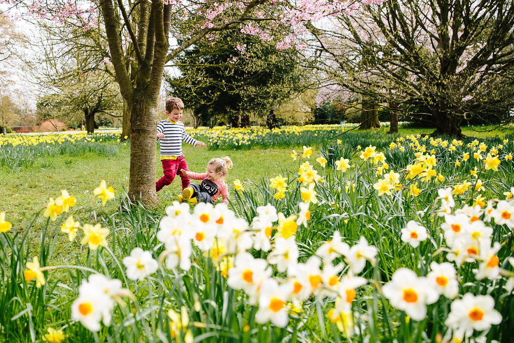 Children in daffodil field, Hampton Court Palace Photography