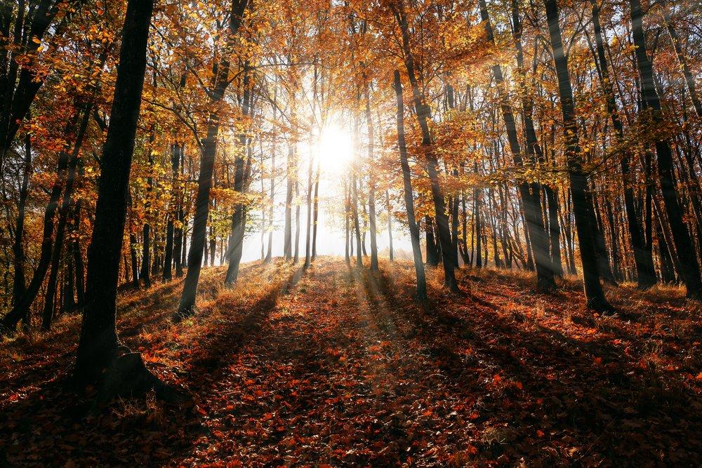 autumn-branch-bright-589816.jpg