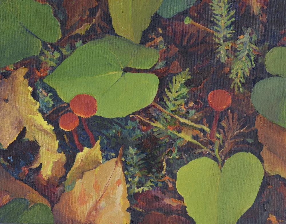 Forest Floor: Mushrooms