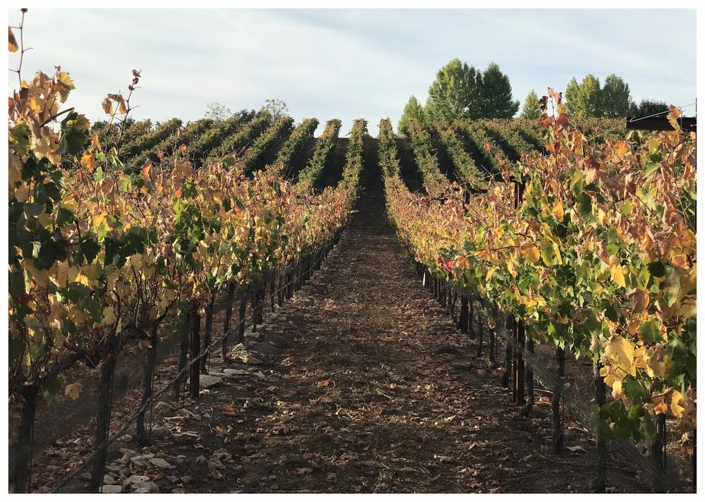 Fall colors are appearing through out our ONX Estate Vineyard.