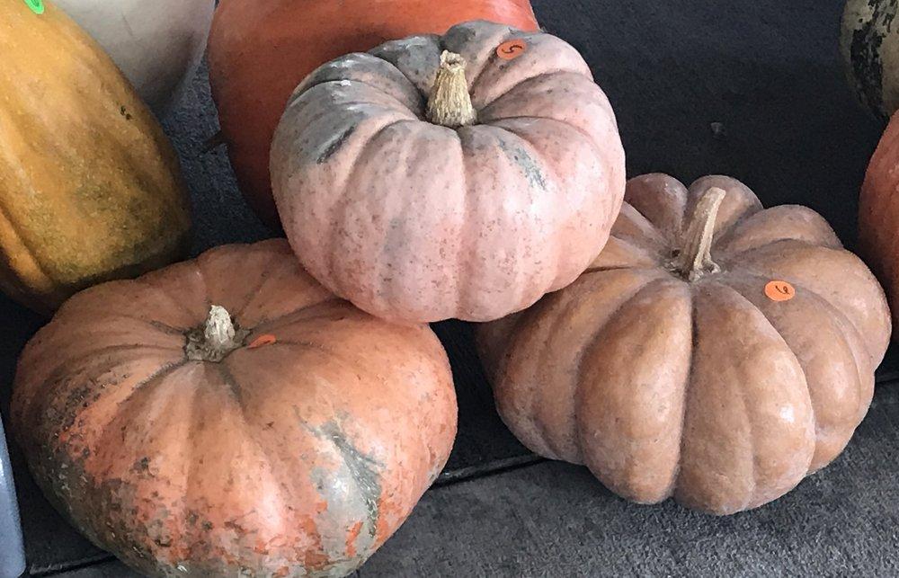 Farmer's Market Jackson, TN