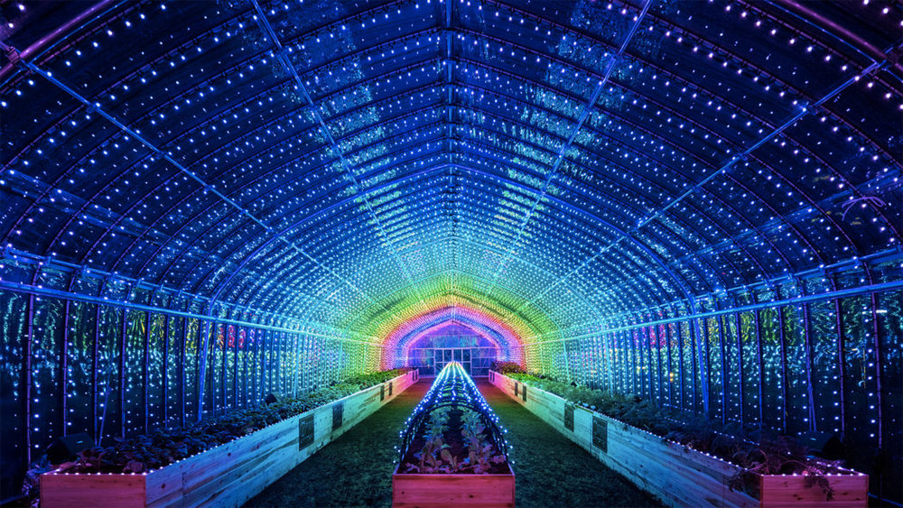 Psychedelic digital greenhouse springs up in tokyo agritecture