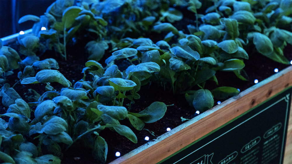Photography: Kenta Hasegawa / Digital Vegetables