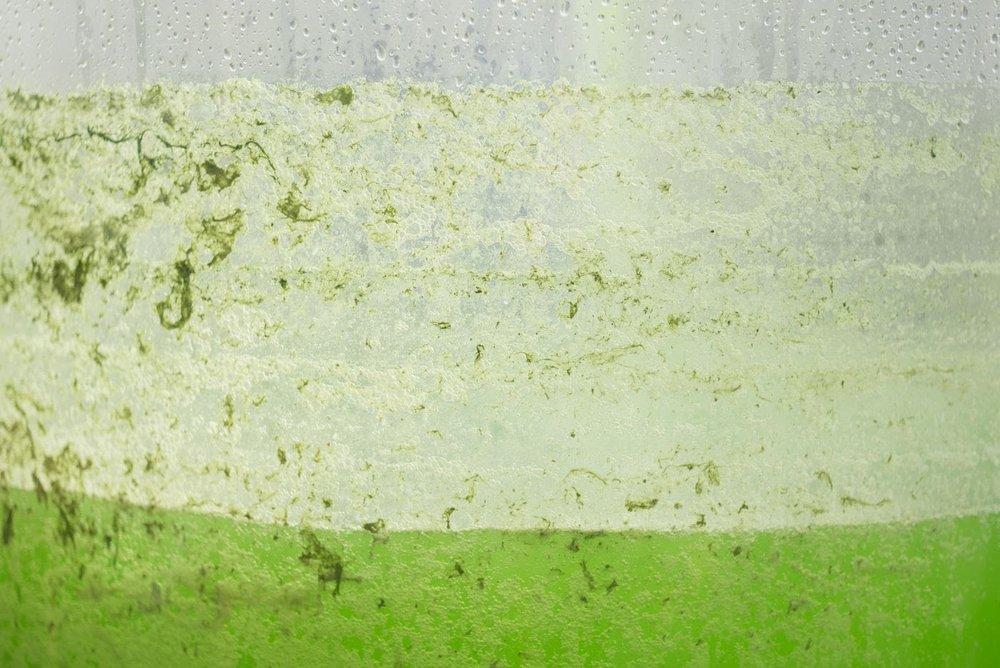 Algae Dome5.jpg