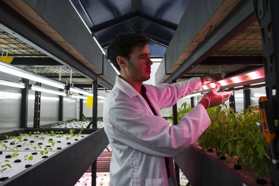 Brandon Hebor, co-founder of Ripple Farms Inc., inspects the growing lights of an aquaponic lab. Ripple currently sells its produce to high-end chefs.
