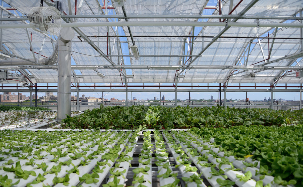 AmHydro growing system in use at Sky Vegetables, The Bronx.