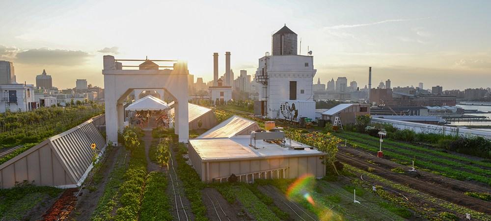 Brooklyn Grange's Navy Yard Farm in New York City.