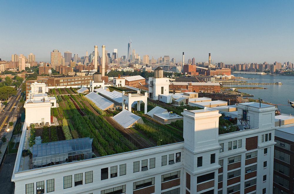 Brooklyn Grange's Navy Yard Farm in NYC.