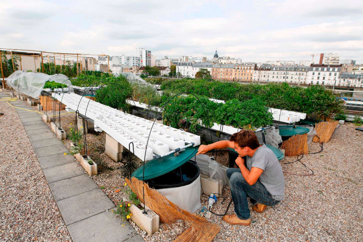 By growing hydroponically on rooftops, urban agriculture can reduce air pollution and produce higher yields with less water consumption than field agriculture. Credit: BENJAMIN CREMEL/AFP/AFP/Getty Images