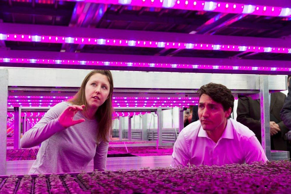 In 2017, Prime Minister Justin Trudeau visited Lufa Farms' Anjou location.(Lufa Farms)