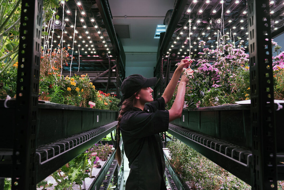 indoor farming — All Blog Posts — AGRITECTURE