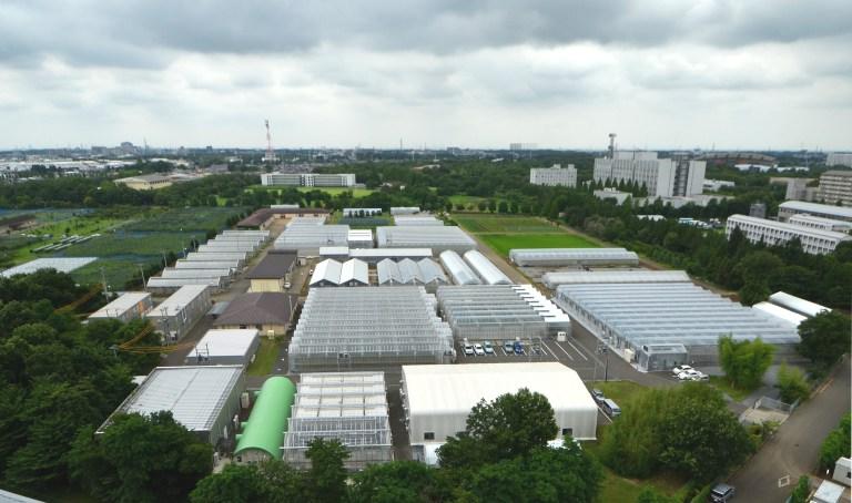 Japan urban agriculture.jpg
