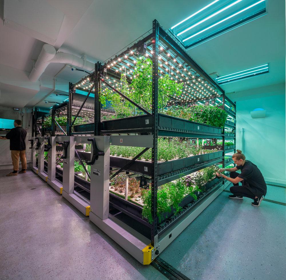 A farm.one indoor farming operation. (Photo courtesy of farm.one.)