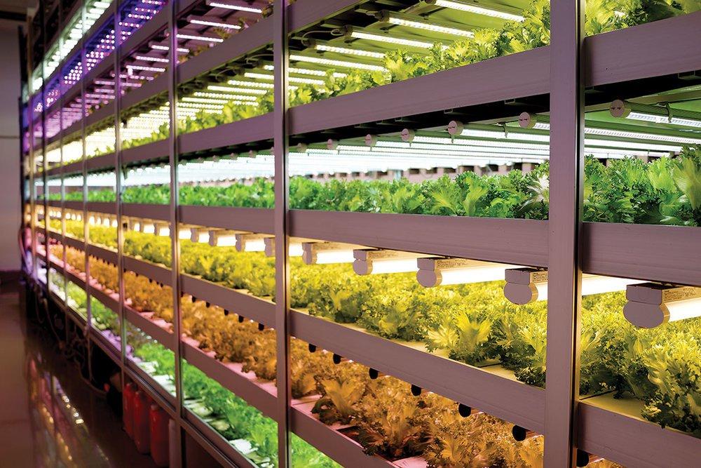 JPFA-vertical-farm.jpeg