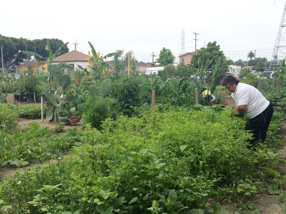 Florence/Firestone Community Garden, in the unincorporated community of Florence-Firestone in L.A. County. (Courtesy of  From Lot to Spot )