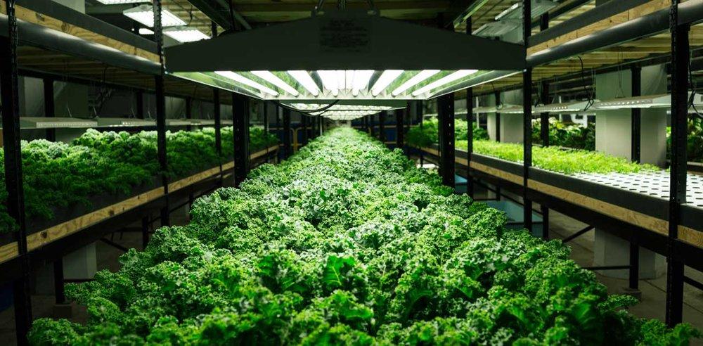 urban farming future of agriculture.jpg
