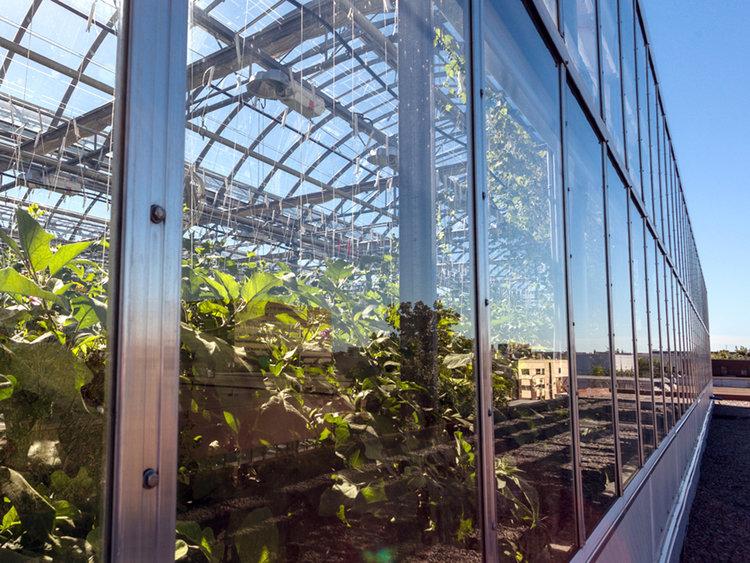 amhydro new rooftop farms singapore.jpg