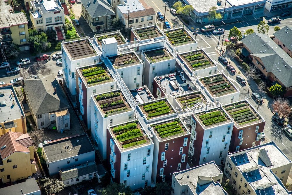 rooftop farm what to know.jpg