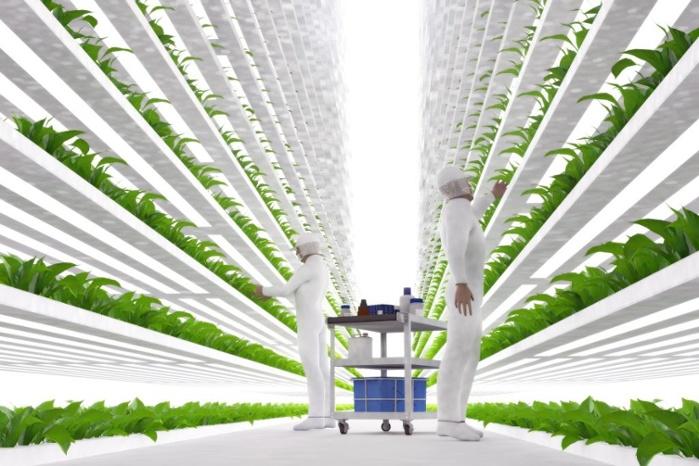 vertical farming on the rise.jpg