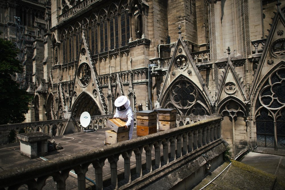 Sibyle Moulin, a beekeeper, tending to hives on the roof of Notre-Dame.