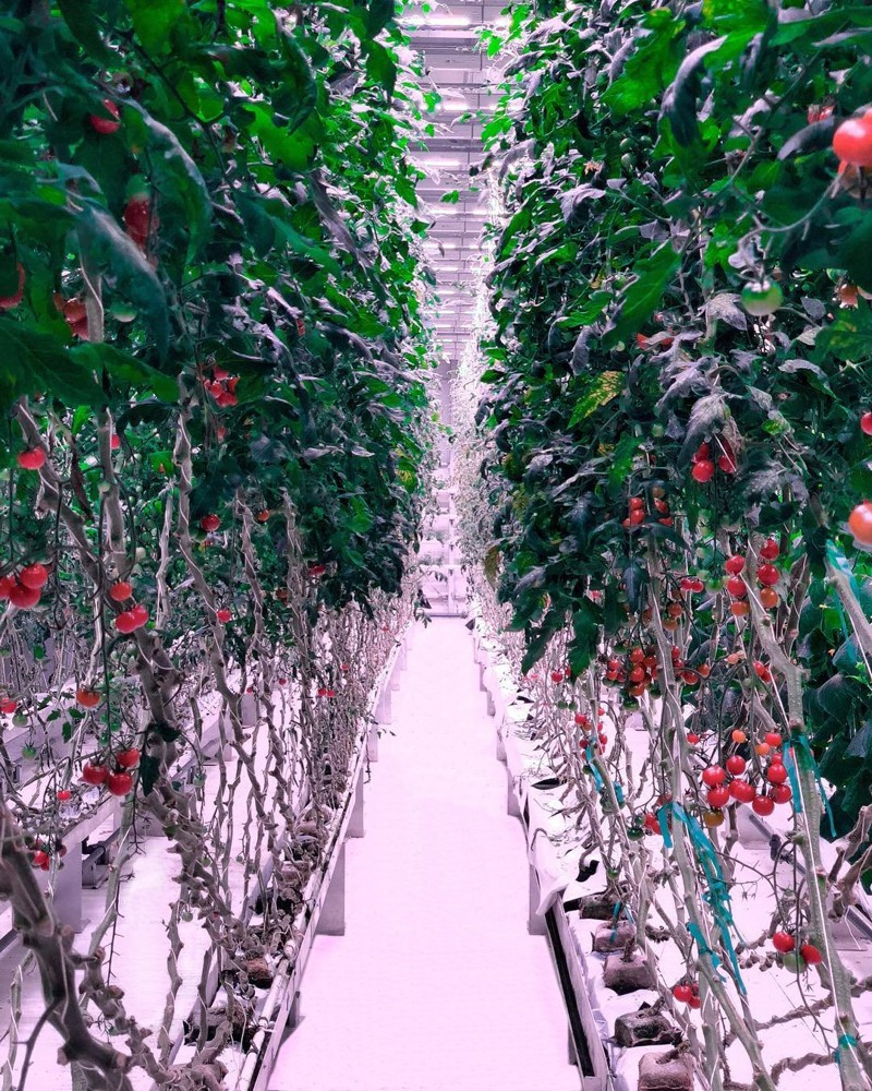 Controlled Environment Agriculture — also known as Indoor Vertical Farming. (Photo: 80 Acres)