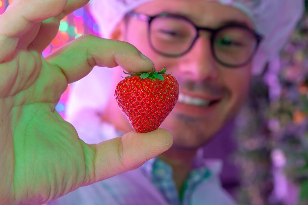 agricool strawberries dubai 2.jpeg