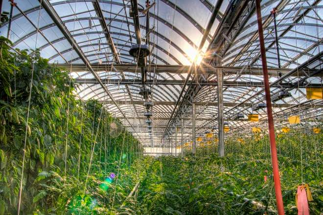 Lufa Farms makes use of vacant roof space to grow food in naturally lit hydroponic greenhouses (Wikimedia Commons)