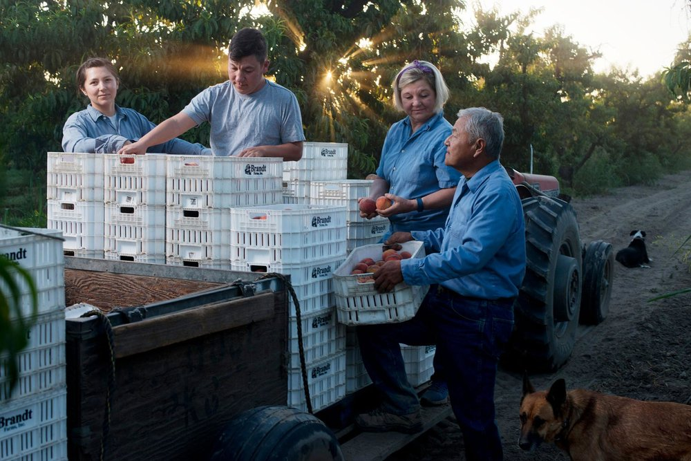 "The Matsumoto family harvests peaches. The farm dates to 1948, when Takashi Matsumoto purchased several acres after he left a Japanese internment camp. Today the 80-acre farm is run by his son, David ""Mas"" Matsumoto, now joined full-time by his daughter Nikiko (far left) along with wife Marcy and son Korio."