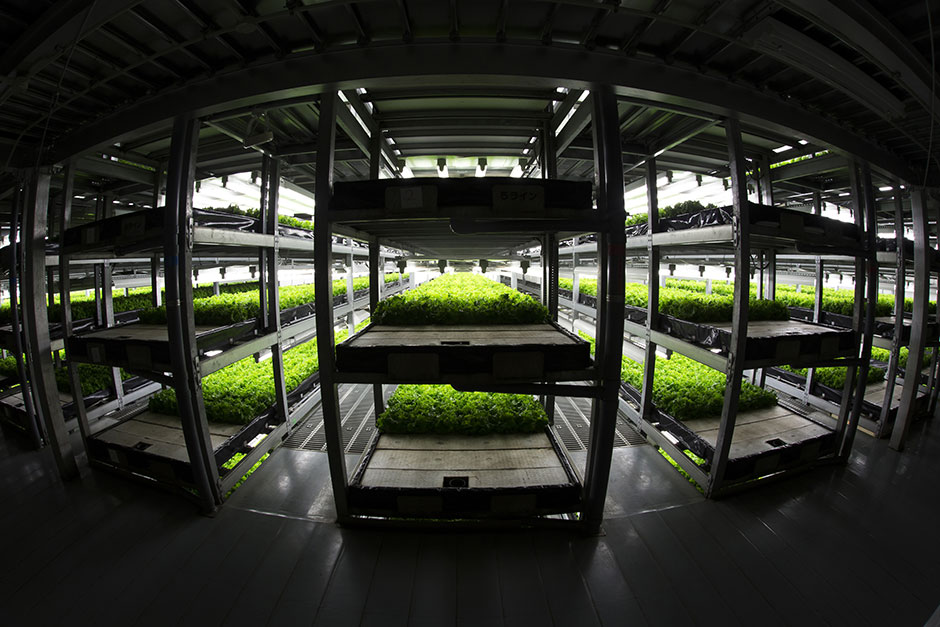 In Japan,  Plant Factories  are becoming an increasingly popular source of safe and healthy greens.