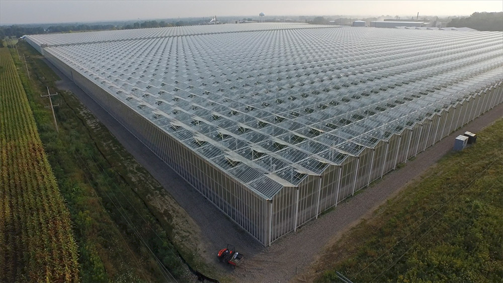 Large-scale hydroponic greenhouses are used to produce food in controlled environments around the world.