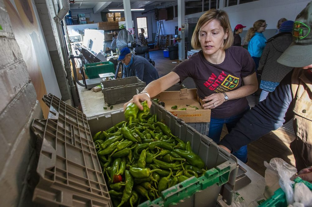 Jennifer Hashley, director of the New Entry Sustainable Farming Project, grabs a handful of peppers for farm share orders in Lowell. (Jesse Costa/WBUR)