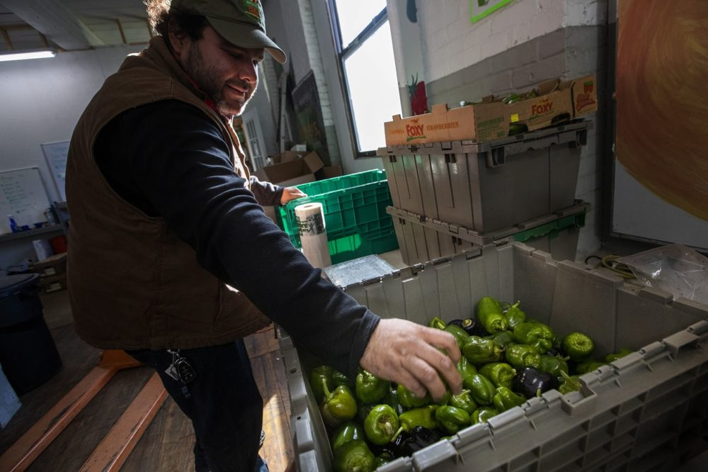 Jorge Marzuca is eligible to lease land on a training farm in Dracut through the New Entry program. (Jesse Costa/WBUR)