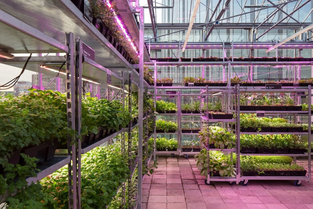 Trays of living herbs and vegetables at The Green House Restaurant in Utrecht. The produce is routinely replenished by Amsterdam-based startup 'Hrbs'. (Photo by Cepezed Architects)