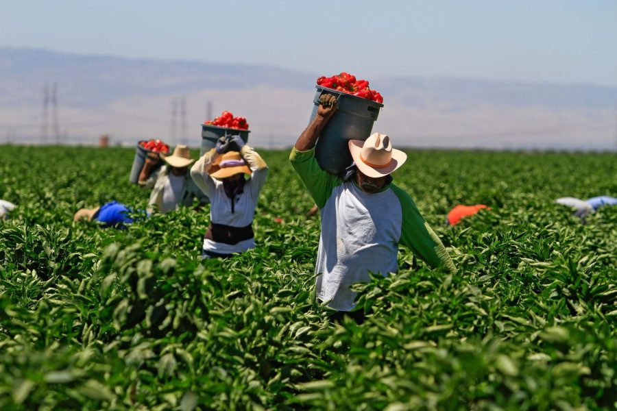 News_Farmworkers-900x600.jpg