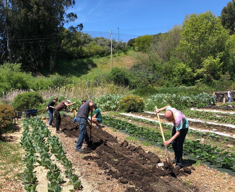 Volunteers planting potatoes.