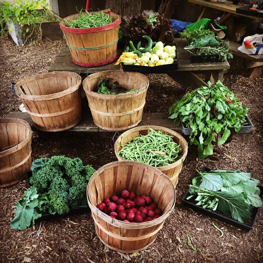 Harvested Produce
