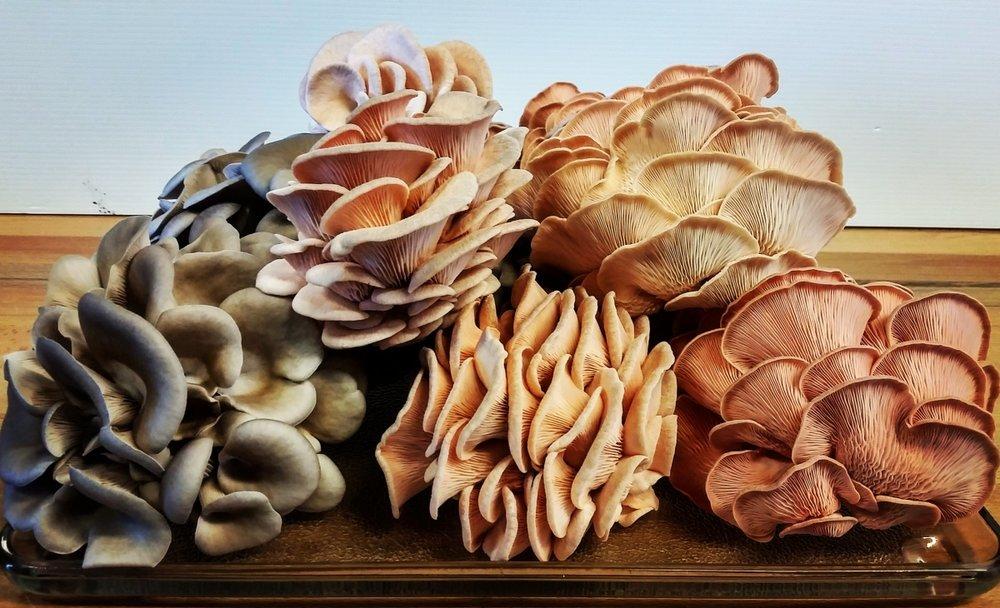 great_mushroom_pic_.jpg