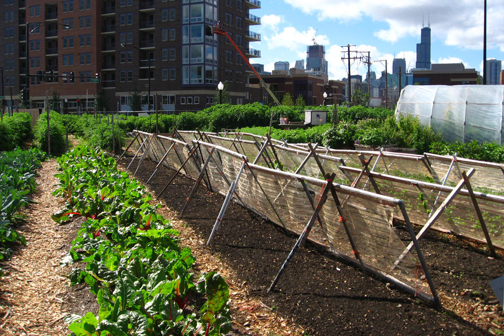 190214-urban-agriculture-agroecology-food-security-food-access-chicago-3.jpg