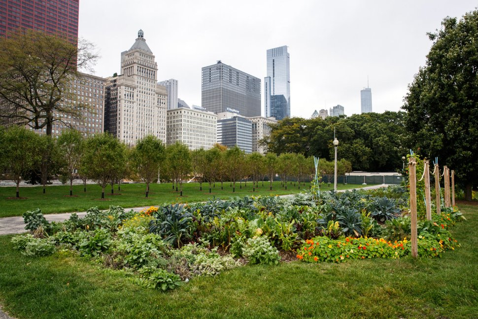 "The Grant Park ""Art in the Farm"" Urban Agriculture Potager, located in Downtown Chicago, grows an abundance of vegetables, culinary herbs and edible flowers on a 20,000 square foot urban farm. (JULIE THURSTON PHOTOGRAPHY/GETTY IMAGES)"