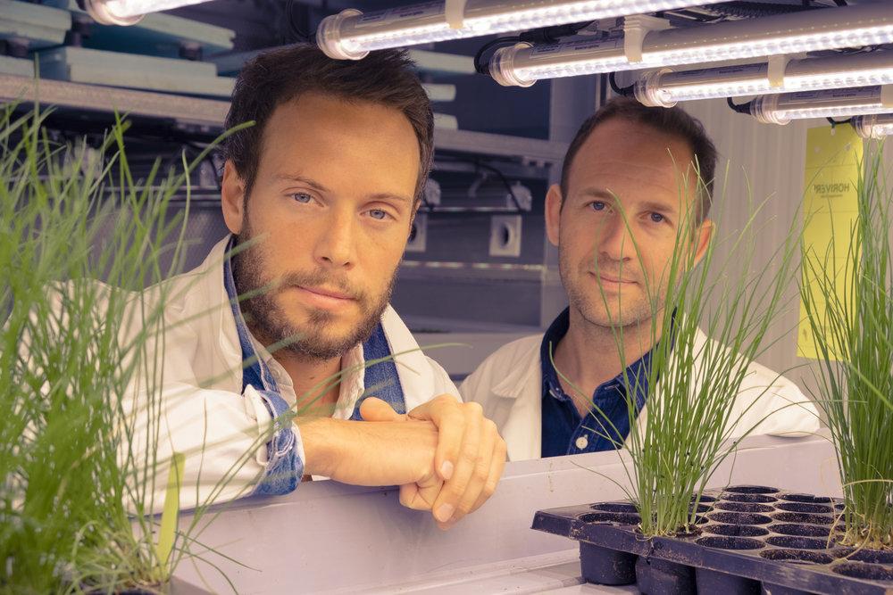 JUNGLE GREENS Founders Gilles Dreyfus & Nicolas Seguy.