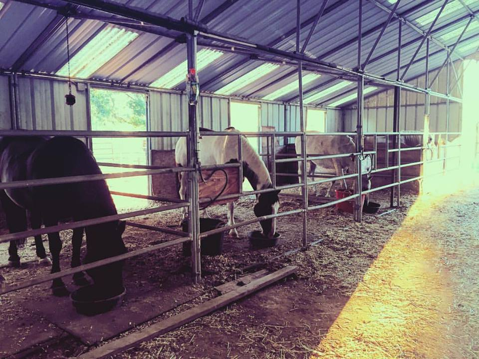 Visit the horses in their stables