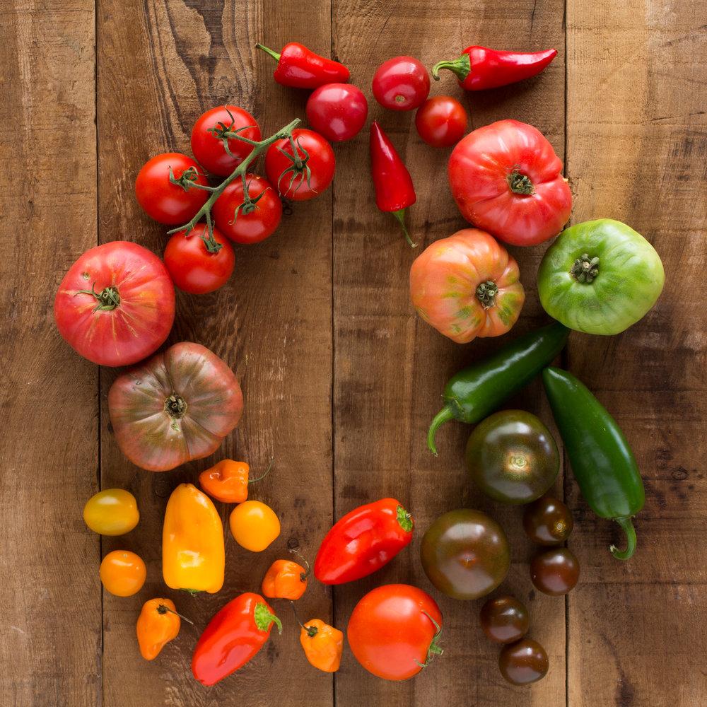 Garden Fresh Gourmet — Tana Gandhi Photography
