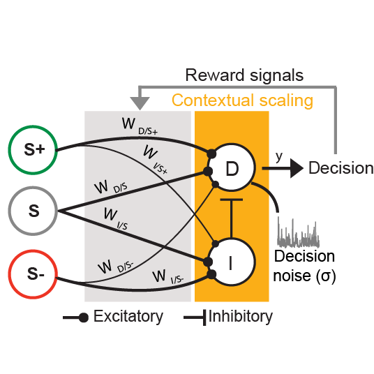 Dissociating task acquisition from expression during learning reveals latent knowledge - Kuchibhotla*, Sten* et al., Nature Communications, 2019