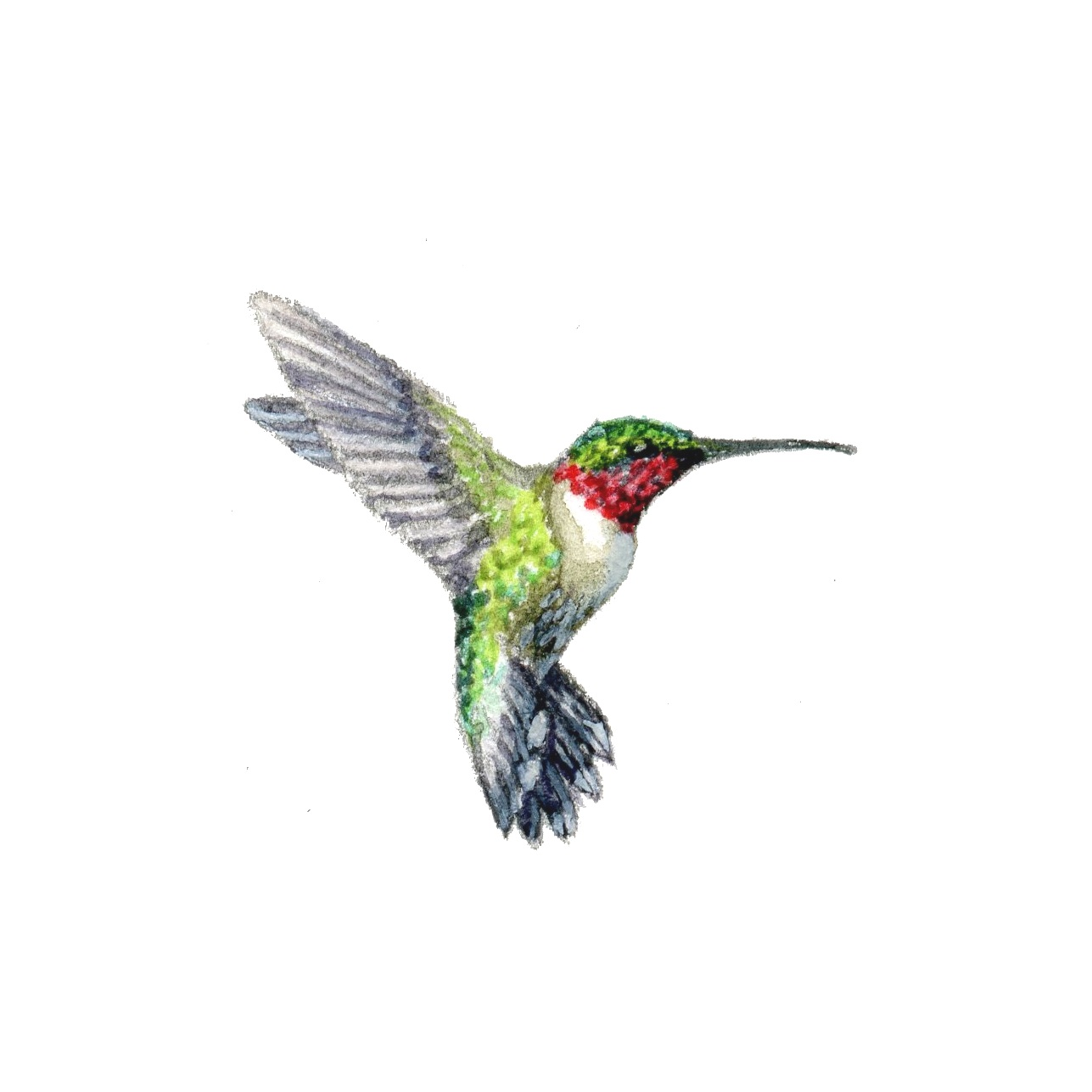 Paintings For Hummingbirds