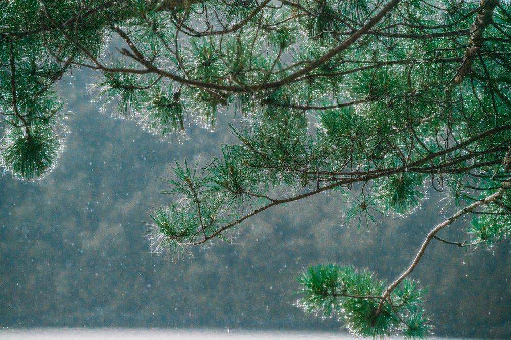 rain-sparkles-on-tree_4460x4460.jpg